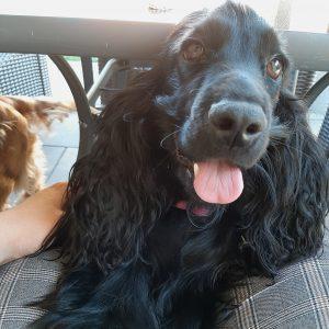 Leksi vel. Bella HAPPY DOG